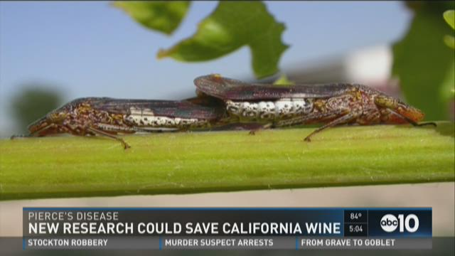 New research could save California wine