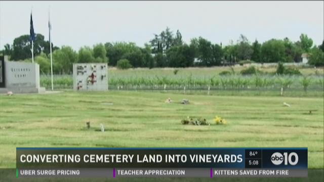 Converting cemetery land into vineyards