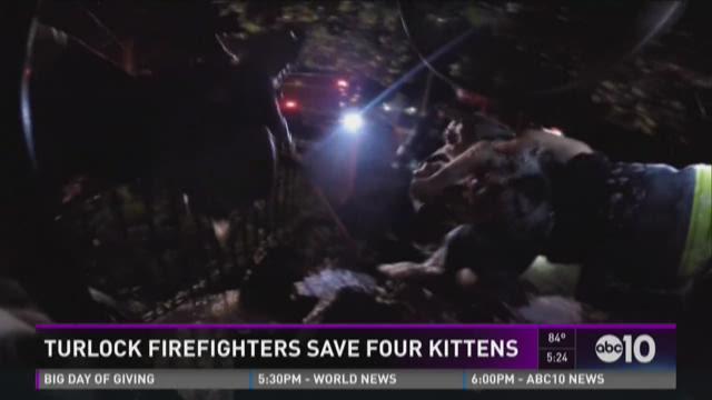 Turlock firefighters save four kittens