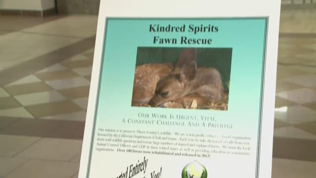 Big Day of Giving: Kindered Spirits Fawn Rescue