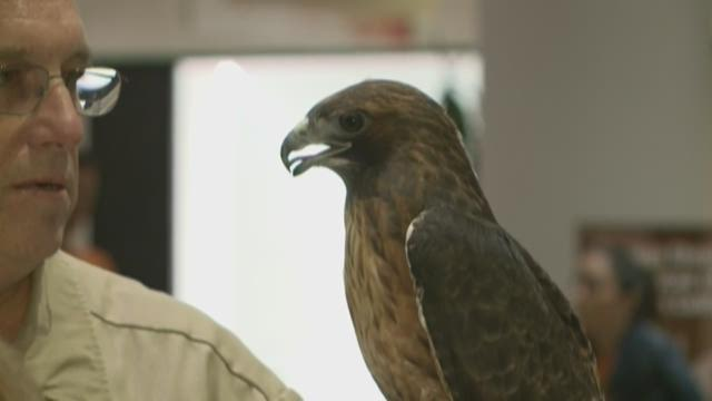 Big Day of Giving: Gold Country Wildlife Rescue