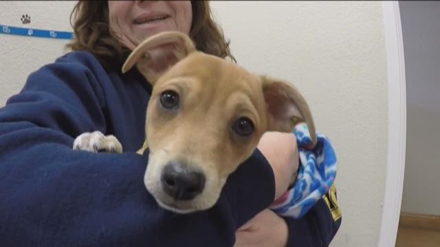 Rescue Dogs Near Sacramento