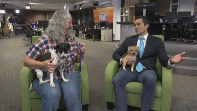 Stockton's Pets of the Week