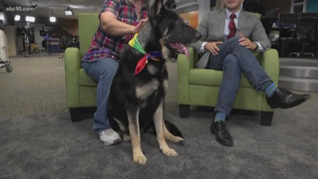 Stockton's Pet of the Week