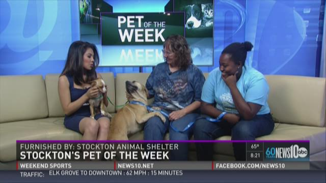 Adopt Gidget and Jamie from the Stockton Animal Shelter!
