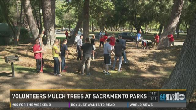 Volunteers mulch trees at Sacramento parks