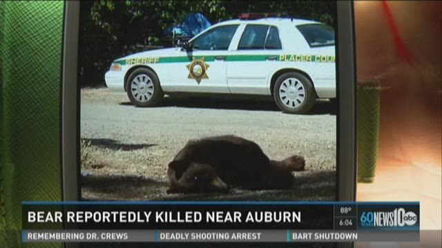 Group claims bear was killed near Auburn