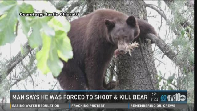 Man says he was forced to shoot and kill bear