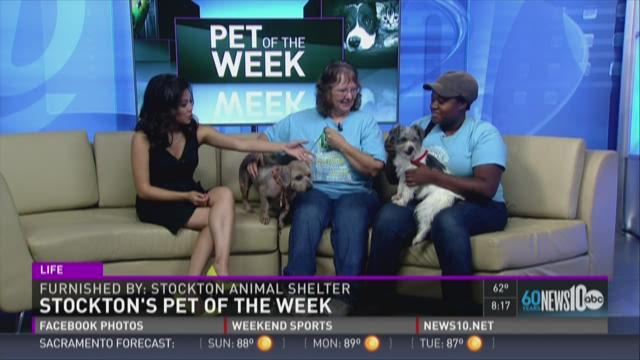 Adopt Cash and Bentley from the Stockton Animal Shelter!
