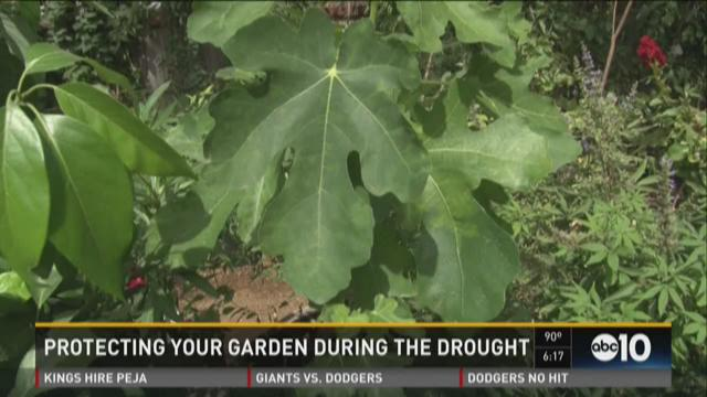Protecting your garden during the drought