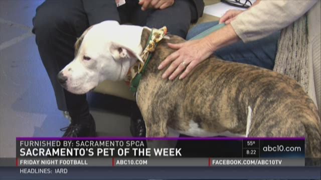 Pet of the Weekend