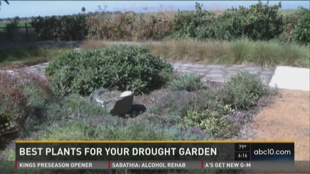 Best plants for your drought garden