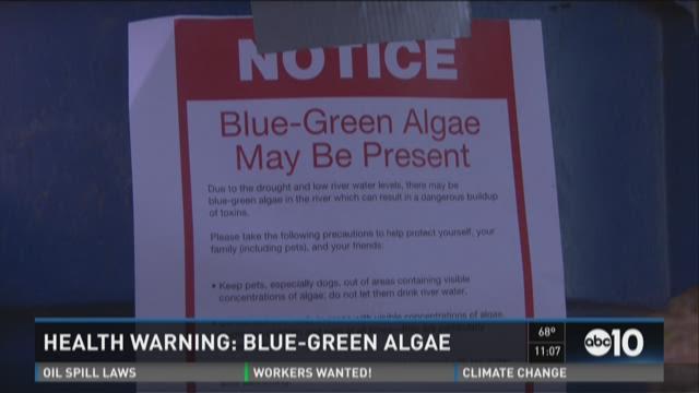 Health warning: Blue-green algae