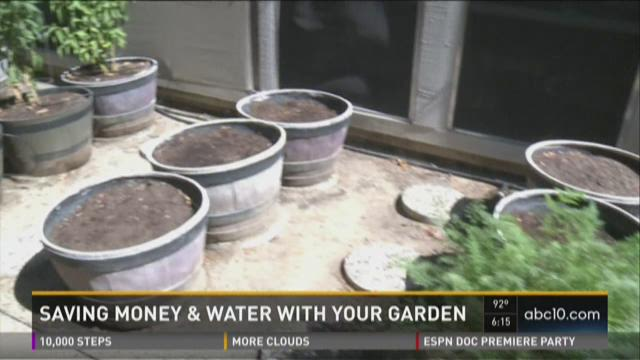 Saving money and water with your garden